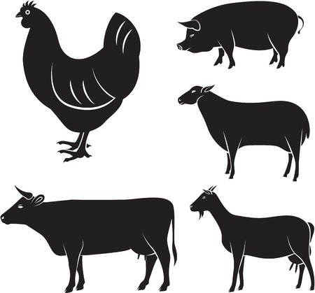 vector set of farm animals chicken, cow, sheep, goat, pigのイラスト素材