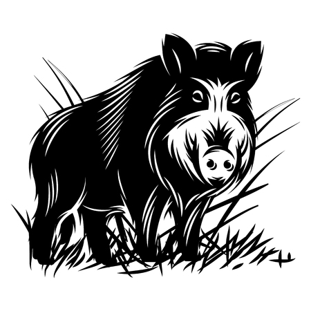 Illustration for vector monochrome illustration with a wild boar in thicket of grass. - Royalty Free Image