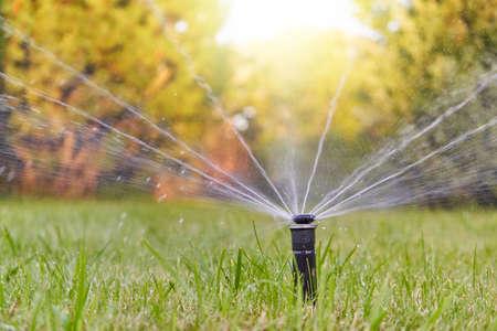 Foto de The lawn is watered by an automatic watering system in the garden - Imagen libre de derechos