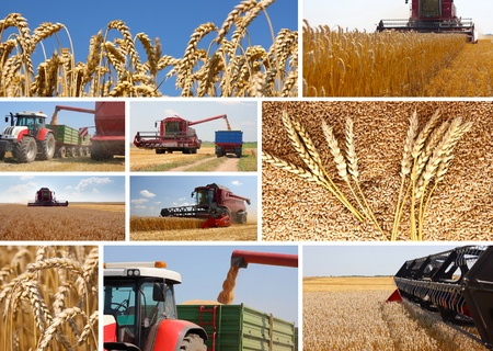 Photo pour Wheat harvest - collage - image libre de droit