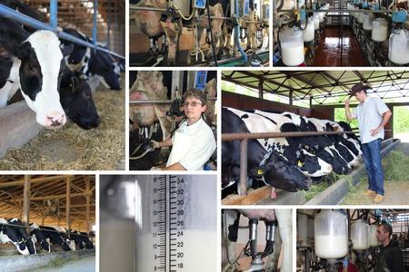 Photo pour Dairy farm, collage - image libre de droit