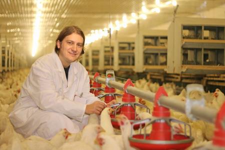 Veterinarian working on chicken farm