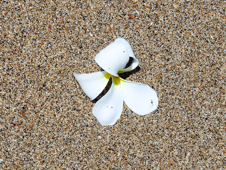 Orchid flower  on the colourful  beach sand