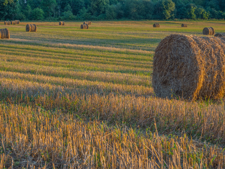Bales of straw in the field in the setting sun. Sunset. Podlasie. Podlachia. Poland, Europe. The region is called Podlasko or Podlasze. Panoramic view.