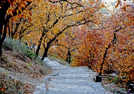 Beijing fragrant Hill in autumn