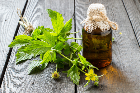 Medicinal plant Geum urbanum and pharmaceutical bottle. Used in herbal medicine, cooking, food for animals, bee plant and insecticide. Selective focus