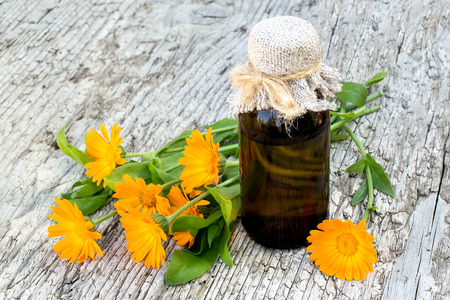 Medicinal plant calendula and pharmaceutical bottle on old wooden table. Actively used in herbal medicine, cosmetics, healthy nutrition