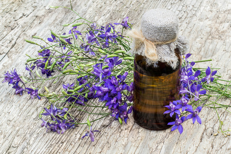 Medicinal plant Consolida regalis (Forking Larkspur, Rocket-larkspur, Field larkspur) and pharmaceutical bottle on old wooden table. It is used in herbal medicine, good honey plant
