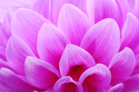 Closeup of pink flower with soft focus floral background