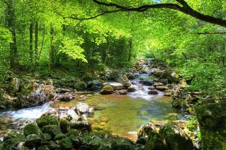 Foto de fall forest stream Smolny in russian primorye reserve  - Imagen libre de derechos