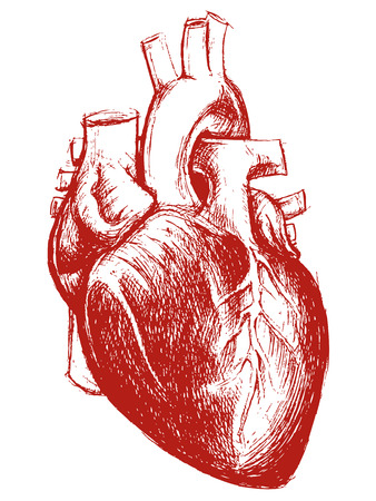 Human Heart Drawing line work