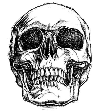 Illustration pour Skull Drawing line work vector - image libre de droit