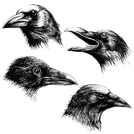 Illustration pour Crow head drawing line work vector set 02 - image libre de droit