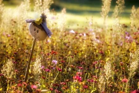 Happy scarecrow in garden of wildflowers.