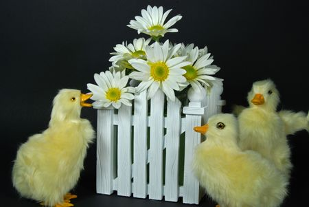 Ducklings with bouquet of daisies.