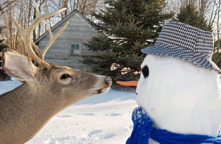Big buck going for the carrot nose on snowman.