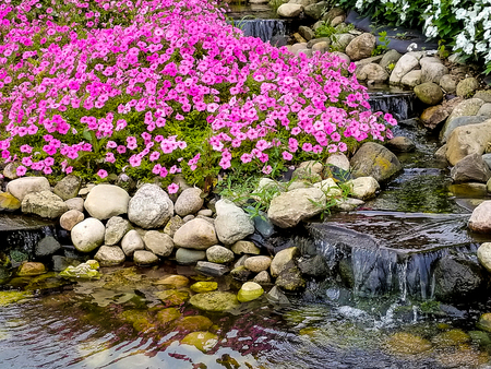 pink petunia plants and waterfall in rock garden