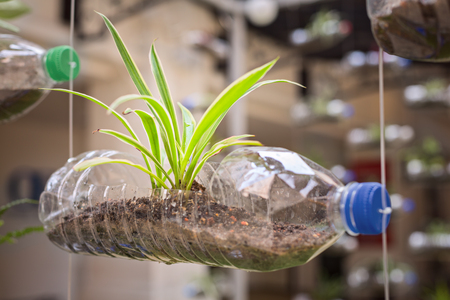 Photo for Empty plastic bottle use as a container for growing plant, recycling green concept - Royalty Free Image