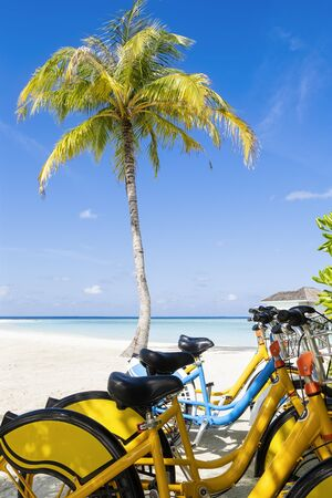 Photo for Group of Bicycles on the tropical sandy beach by a palm tree with sky and calm sea at background, vertical composition - Royalty Free Image