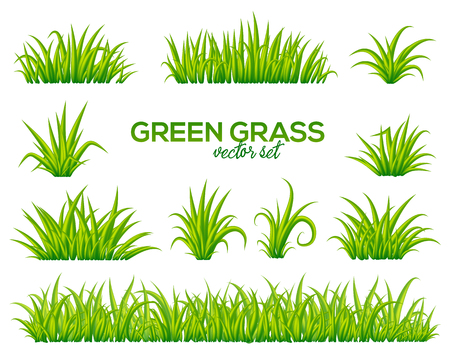 Vector tufts of grass set isolated on white background