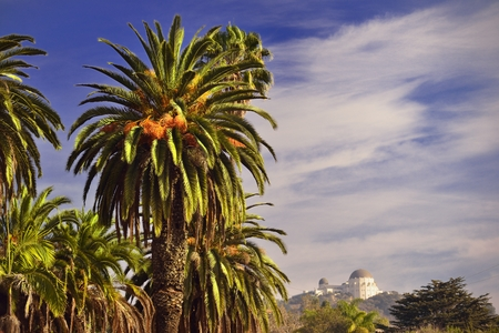 palms and the astronomy observatory