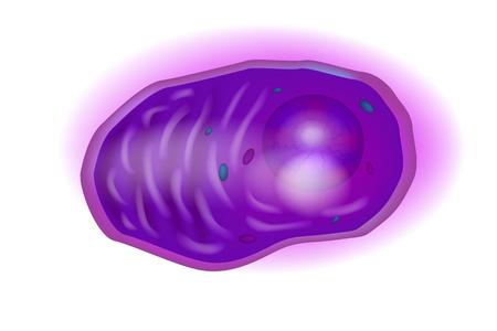 Illustration for Plasma cells, also called plasma B cells, plasmocytes, plasmacytes, or effector B cells, are white blood cells. - Royalty Free Image