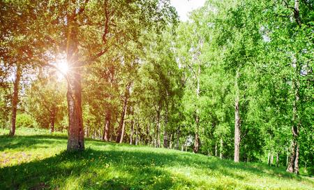 Photo pour Beautiful park background. Plants and trees landscape - image libre de droit