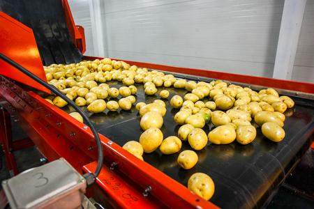 Foto für Potato sorting, processing and packing factory vegetable with big machine - Lizenzfreies Bild
