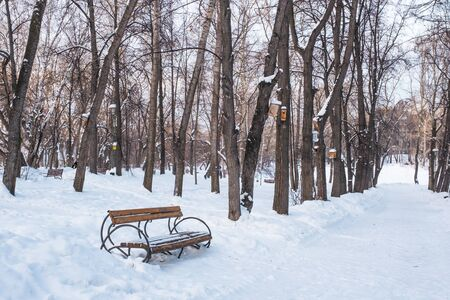 Winter city landscape. Wooden brown bench in the alley of a snowy old park. Birdhouses hang on the trees.