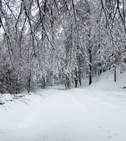 Photo pour Frozen forest with tree branches and twigs covered in snow and ice for winter holiday backgrounds. - image libre de droit
