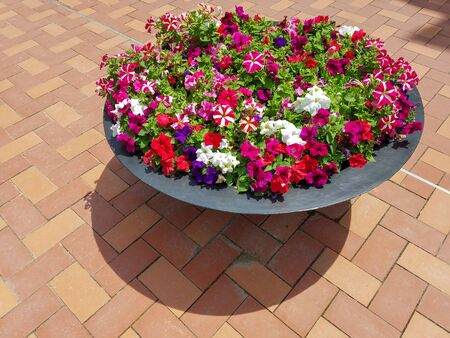 Photo for Red, white and purple petunias in a flower planter on a ceramic tiled patio for landscapes and floral backgrounds. - Royalty Free Image