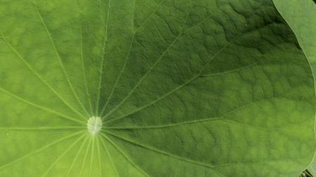 Photo pour leaf in a little lake - image libre de droit