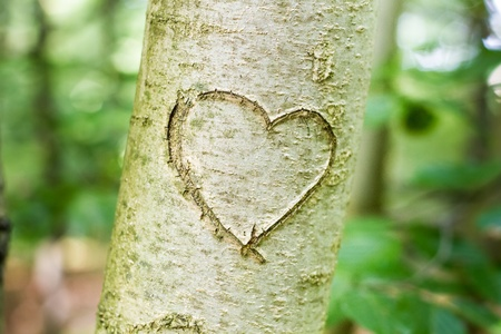 heart shape carved on treeの写真素材