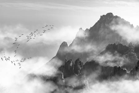 Photo pour Mount Huangshan pine and fog - image libre de droit