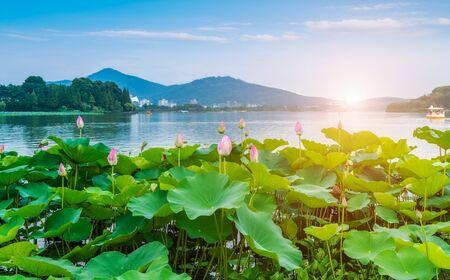 Photo pour lotus pond scenery - image libre de droit