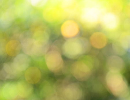 light bokeh green