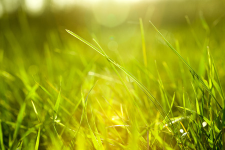 Photo pour Grass - image libre de droit