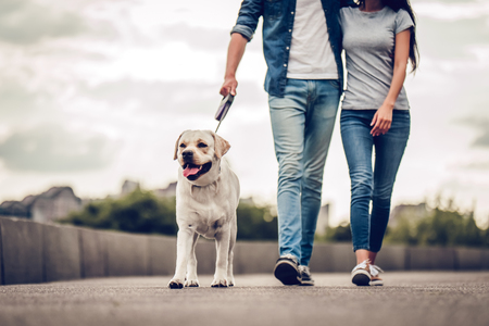 Foto de Cropped image of romantic couple is on a walk in the city with their dog labrador. Beautiful young woman and handsome man are having fun outdoors with golden retriever labrador. - Imagen libre de derechos