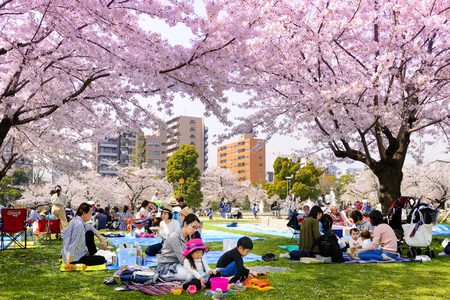 Foto de TOKYO JAPAN - MARCH 29, 2018 : Kinshi Park, Unidentified tourists visit the cherry blossom. this phenomenon only once year. It is attractive to both Japanese and foreigners, main activities are family - Imagen libre de derechos