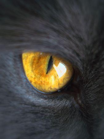part of gray cat face, orange eye