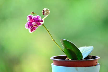 Beautiful orchid flower pot