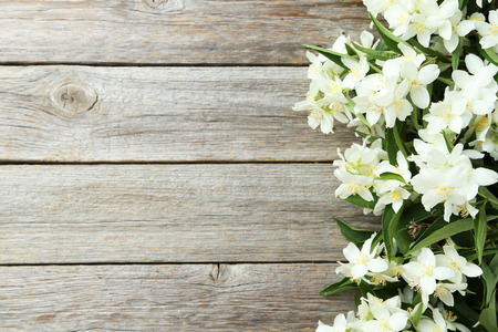 Photo for White flowers of jasmine on grey wooden background - Royalty Free Image