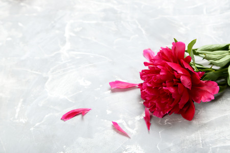 Red peony flowers on a grey background