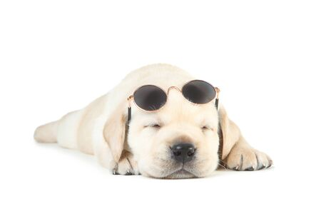 Photo pour Labrador puppy with sunglasses isolated on white background - image libre de droit