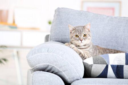 Photo pour Beautiful cat lying on grey sofa - image libre de droit