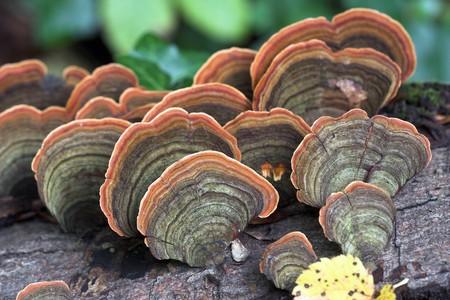 Mushrooms on the tree, close up