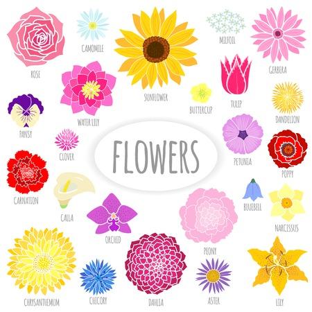 Illustration pour Set of abstract flat flowers. Vector illustration - image libre de droit