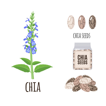 Illustration pour Superfood chia set in flat style: chia seeds, packaging. Organic healthy food. Isolated objects on white background. Vector illustration - image libre de droit