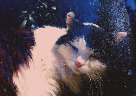 B W cat behind the window