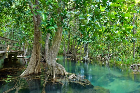 Mangrove Forest I